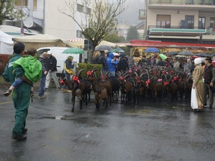 Festa Rurale del Cevrin 2013