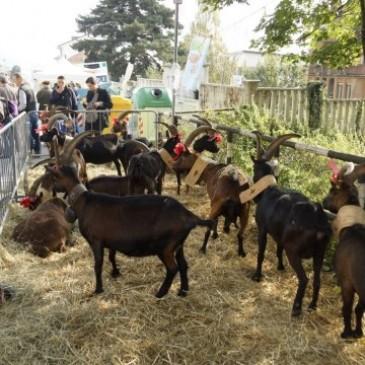 XIV Festa Rurale del Cevrin 2014